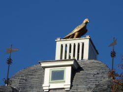 Aigle – Château Delune – Bruxelles
