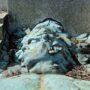 Tombe de Georges Nelis – cimetière de Bruxelles – Evere - Image2