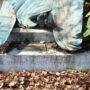 Tombe de Georges Nelis – cimetière de Bruxelles – Evere - Image16
