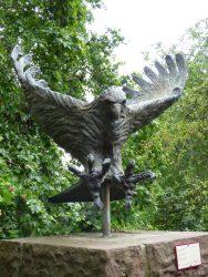 Aigle chasseur – Jardin zoologique – Antwerpen (Anvers)
