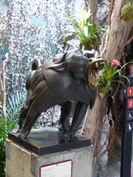 Babouin sacré – Jardin zoologique – Antwerpen (Anvers)