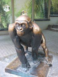 Jeune gorille – Jardin zoologique – Antwerpen (Anvers)