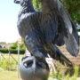 Aigle impérial (2) - Mémorial 1815 - Braine-l'Alleud - Image3