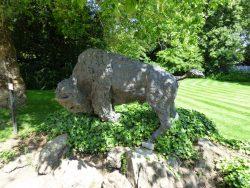 Bison américain – Jardin zoologique – Antwerpen (Anvers)